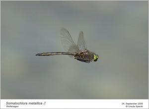 AF_S.metallica_M_US_02